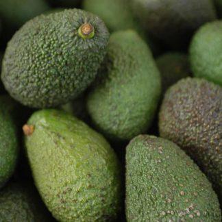 Bơ Chile và những lợi ích cho sức khỏe4