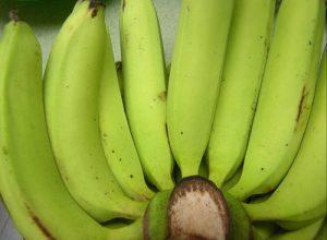Chuối già hương già được xuất khẩu sang Châu Âu, trái dài và cong, khi chín màu xanh. Thực phẩm tốt cho người bệnh Guot.