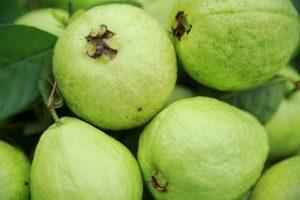 Ổi Bo giòn, ngọt và có mùi thơm đặc trưng. Để trong ngăn mát khi ăn sẽ làm dịu cơn nóng trong mùa nóng bức.